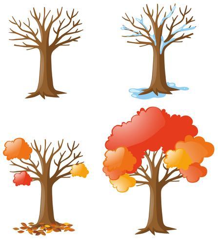 Árbol en diferentes temporadas.