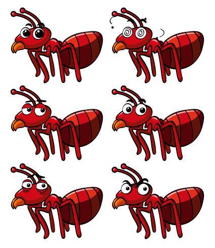 Rote Ameise mit verschiedenen Gesichtsausdrücken