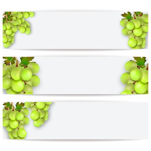 Cartões ou etiquetas com uvas realistas. Ilustração vetorial vetor