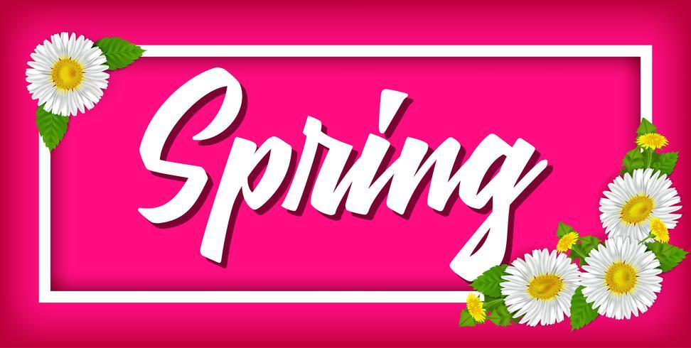 Banner de primavera com camomila realista. Ilustração vetorial