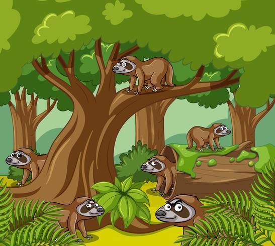 Faultiere leben im Wald vektor