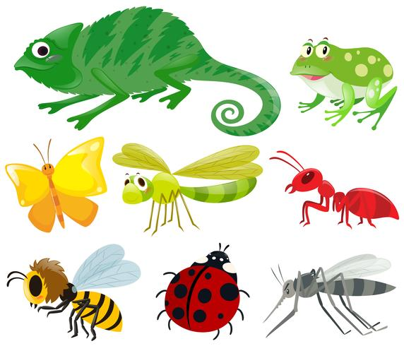 Different types of insects vector
