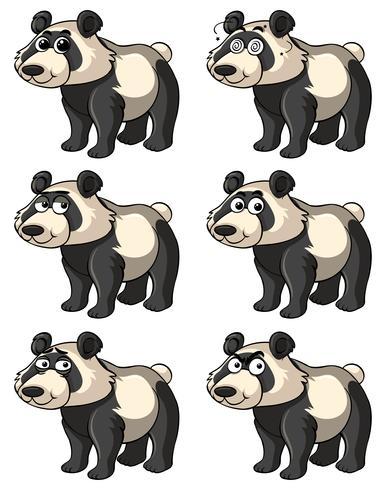Panda con diferentes expresiones faciales.
