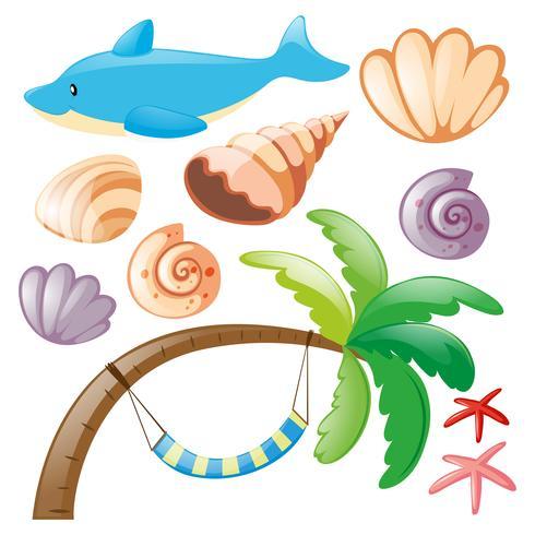 Delphin und Muscheln auf weiß