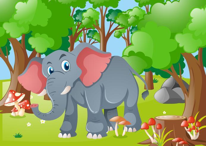 Éléphant dans la forêt