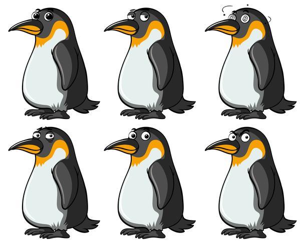 Pingüinos con diferentes expresiones faciales.