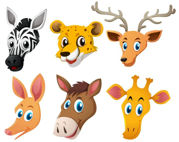Animal heads on white background vector