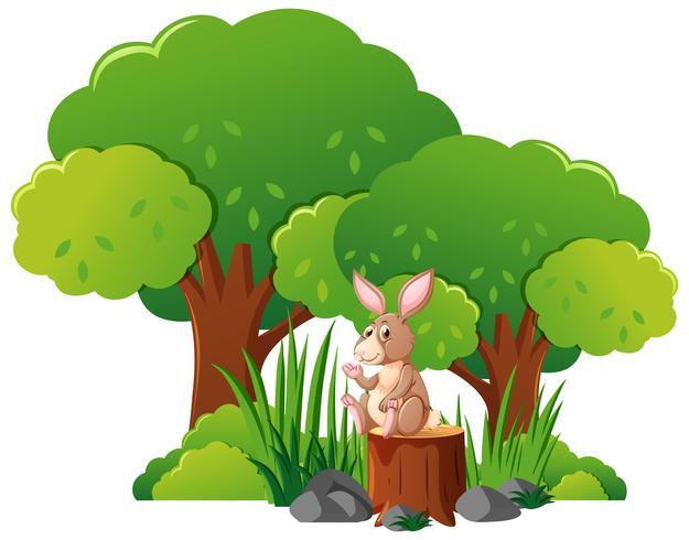 Coniglio selvatico nella foresta vettore