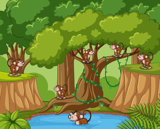Många apor i skogen vektor