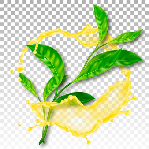 Realistic tea leaves. Splash with drops. Vector illustration.