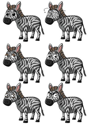 Zebra with different expressions vector