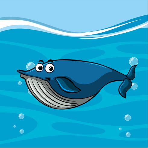 Whale simning i havet