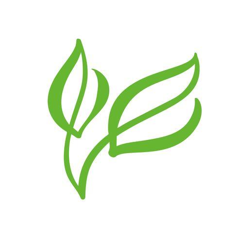 Logotipo de la hoja verde del té. Ecología naturaleza elemento vector icono de jardín. Bio vegano caligrafía bio dibujado a mano ilustración