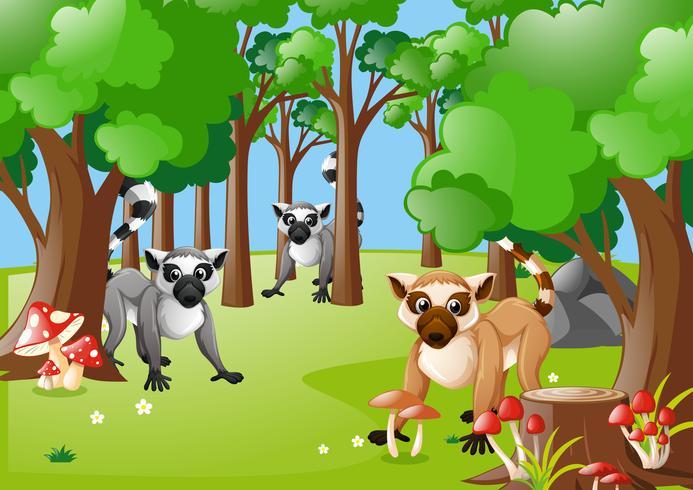 Lemurer som bor i skogen
