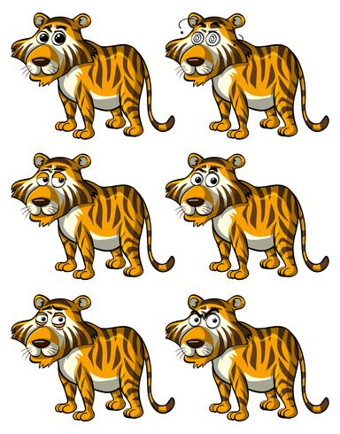Tiger with different facial expressions vector