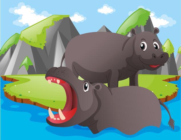 Zwei Flusspferde am Fluss