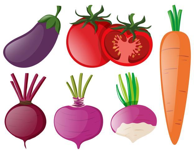 Diversi tipi di verdure colorate vettore