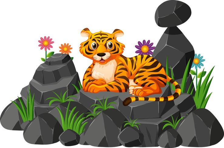 Tigre selvaggia sulla roccia