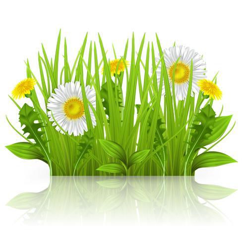 Tusenskönor, maskrosor och gräs på en vit bakgrund. Realistiska vektorgrönor