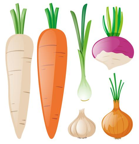 Karotten und anderes Wurzelgemüse