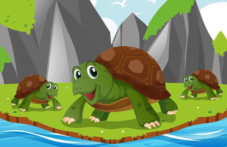 Turtles living by the river vector