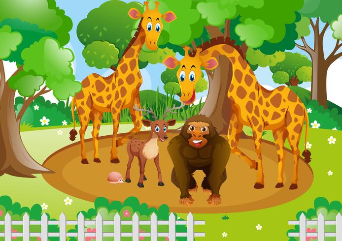 Wild animals living in the park vector
