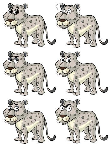 Cheetah with different emotions