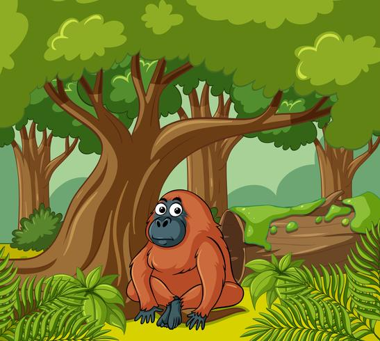 Orangutan lives in the forest