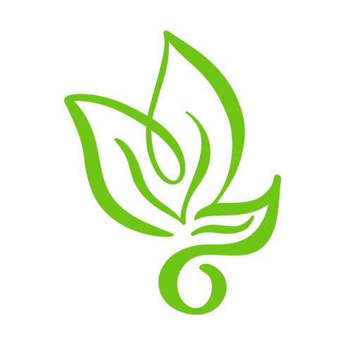 Logo av grönt blad av te. Ekologi naturelement vektor ikon träd. Eco veganisk bio kalligrafi handritad illustration