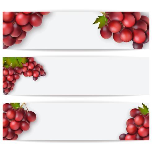 Carte o etichette con uve realistiche. Illustrazione vettoriale