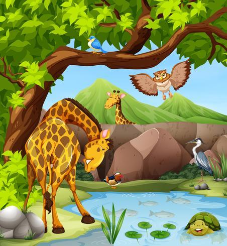 Wilde dieren bij de vijver vector