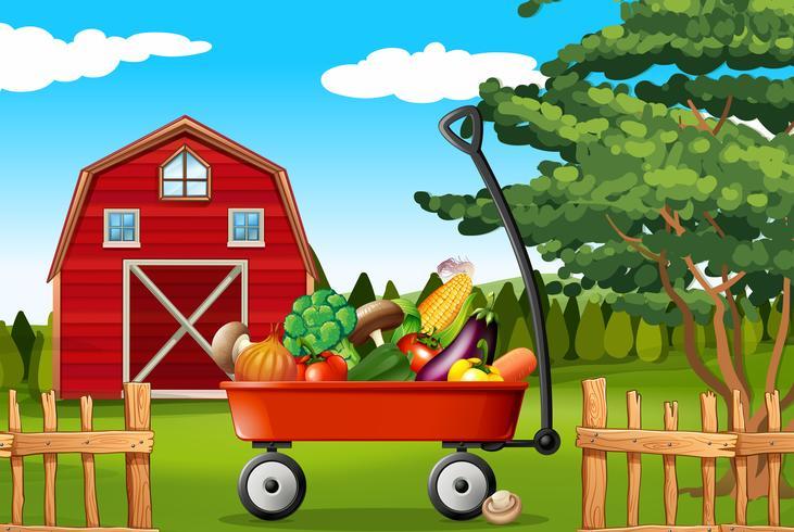 Gemüse auf dem Bauernhof vektor