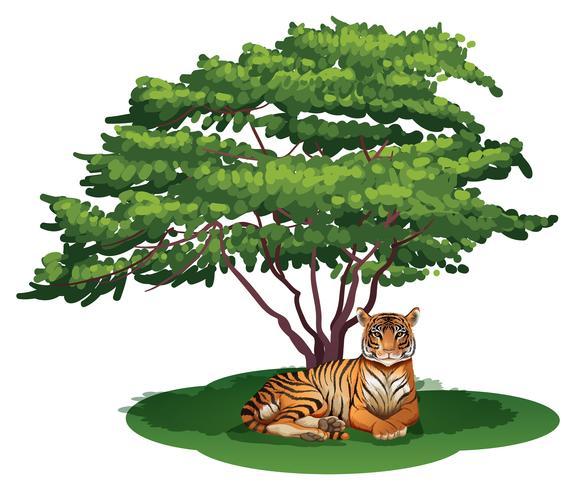 Un tigre sous l'arbre