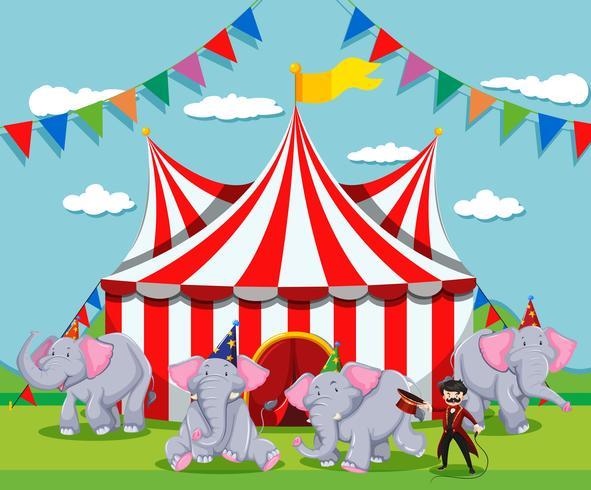 Spectacle d'éléphants au cirque vecteur