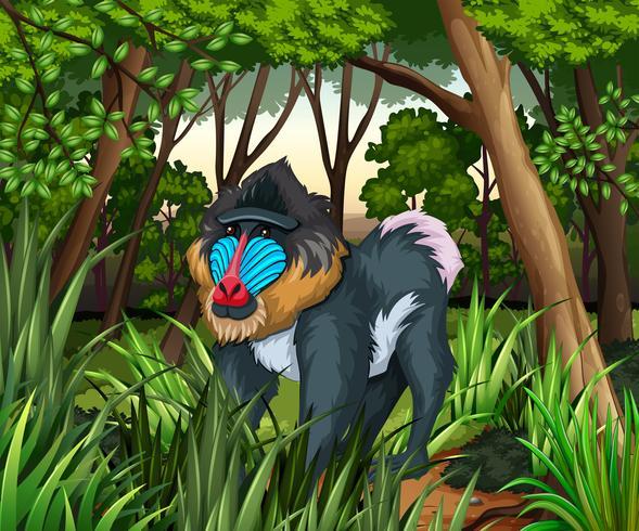 Babouin vivant dans la sombre forêt