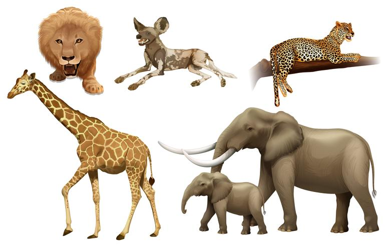 Animales africanos vector