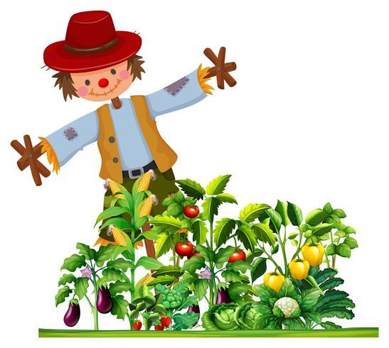 Espantapájaros y muchos tipos de vegetales en el jardín.