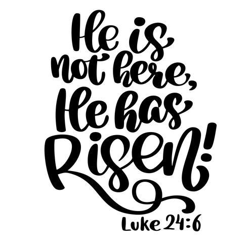Handritad Han har stigit, Luke 24 6 text på vit bakgrund. Bibelsk bakgrund. Nya testamentet. Kristen vers, vektor illustration isolerad på vit bakgrund
