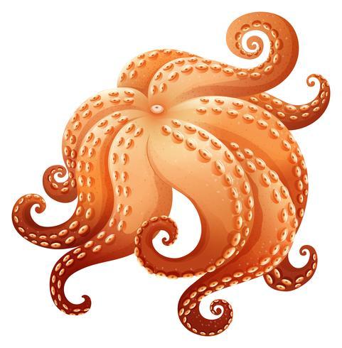 章魚卡通 免費下載 | 天天瘋後製