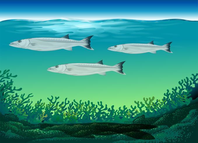 Três, peixe, natação, sob, mar