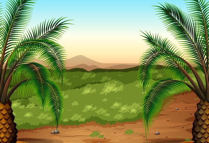 Plantas de palma e grama