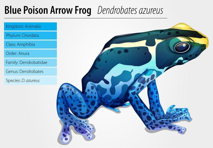 Grenouille Dart Poison vecteur