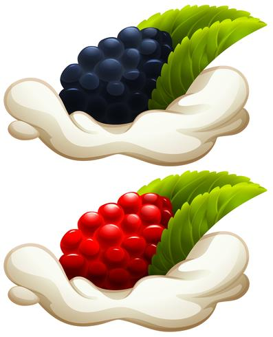 Rasberry e mora su crema