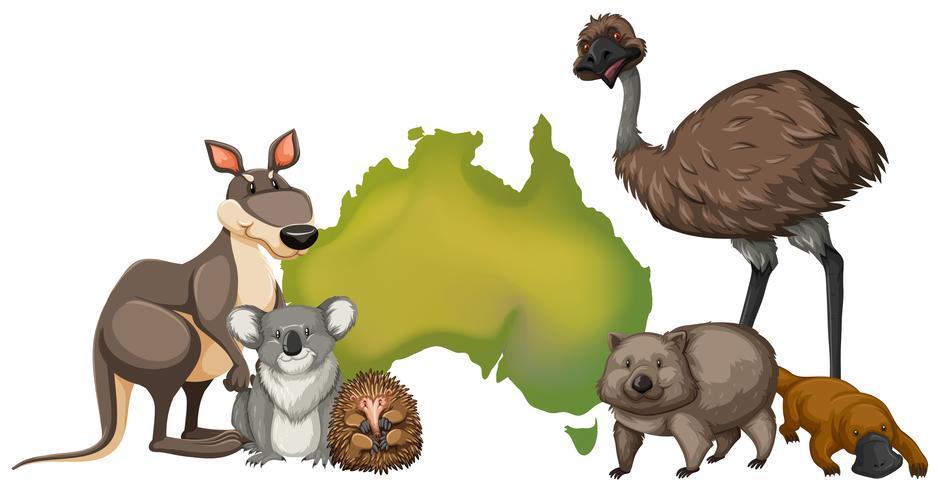 Wilde Tiere in Australien