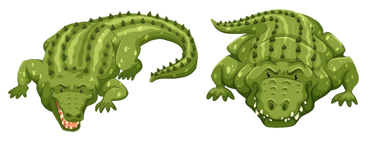 鱷魚卡通 免費下載   天天瘋後製