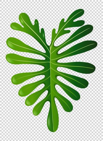 Grünes Blatt auf transparentem Hintergrund