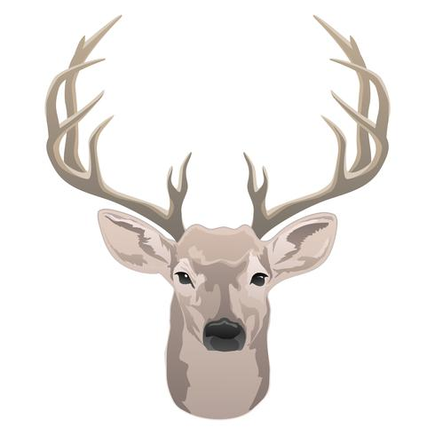 Deer head, beautiful buck with antlers color isolated vector illustration