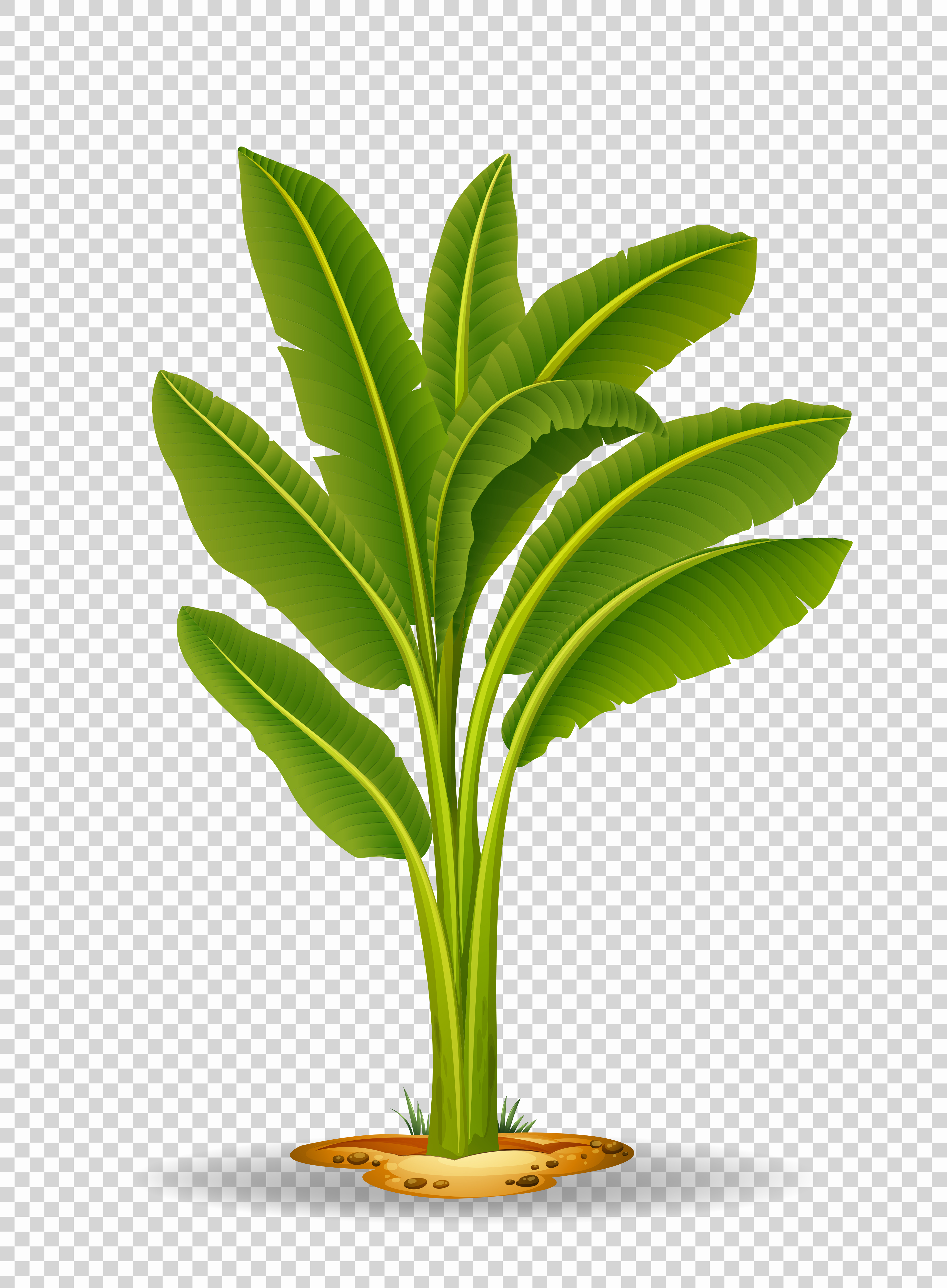 Banana tree on transparent background - Download Free ...