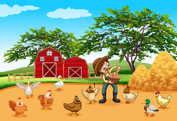 Farmer with chickens and eggs