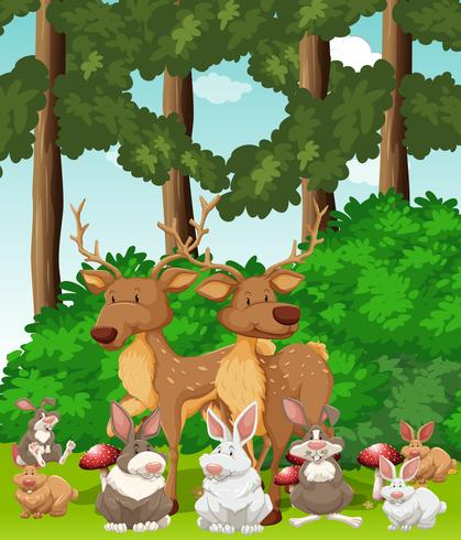 Hjortar och kaniner i djungeln